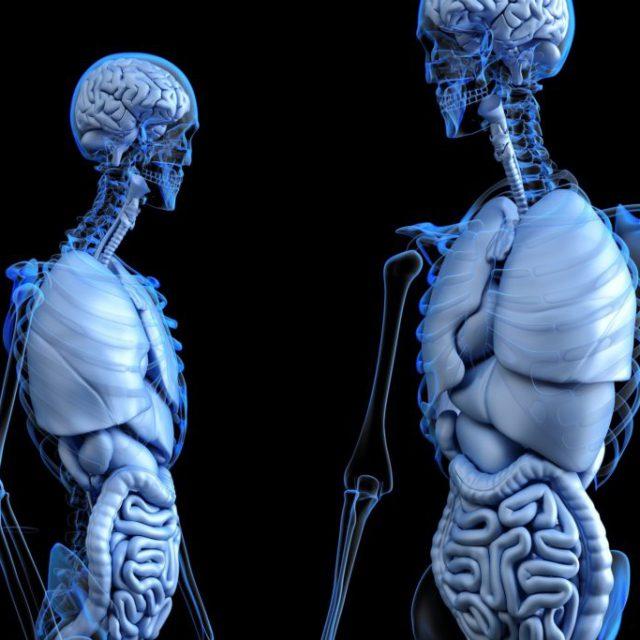 anatomical-2261006_1920-1024x683